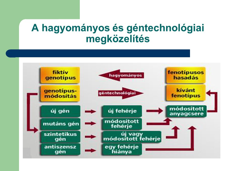 A hagyományos és géntechnológiai megközelítés