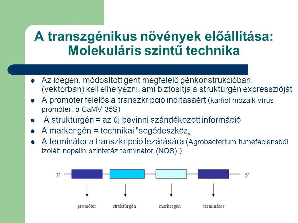 """A transzgénikus növények előállítása: Molekuláris szintű technika Az idegen, módosított gént megfelelő génkonstrukcióban, (vektorban) kell elhelyezni, ami biztosítja a struktúrgén expresszióját A promóter felelős a transzkripció indításáért ( karfiol mozaik vírus promóter, a CaMV 35S ) A strukturgén = az új bevinni szándékozott információ A marker gén = technikai segédeszköz"""" A terminátor a transzkripció lezárására ( Agrobacterium tumefaciensből izolált nopalin szintetáz terminátor (NOS) )"""