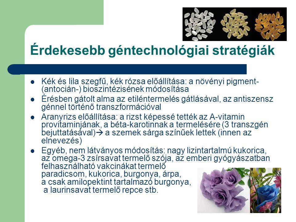 Érdekesebb géntechnológiai stratégiák Kék és lila szegfű, kék rózsa előállítása: a növényi pigment- (antocián-) bioszintézisének módosítása Érésben gátolt alma az etiléntermelés gátlásával, az antiszensz génnel történő transzformációval Aranyrizs előállítása: a rizst képessé tették az A-vitamin provitaminjának, a béta-karotinnak a termelésére (3 transzgén bejuttatásával)  a szemek sárga színűek lettek (innen az elnevezés) Egyéb, nem látványos módosítás: nagy lizintartalmú kukorica, az omega-3 zsírsavat termelő szója, az emberi gyógyászatban felhasználható vakcinákat termelő paradicsom, kukorica, burgonya, árpa, a csak amilopektint tartalmazó burgonya, a laurinsavat termelő repce stb.