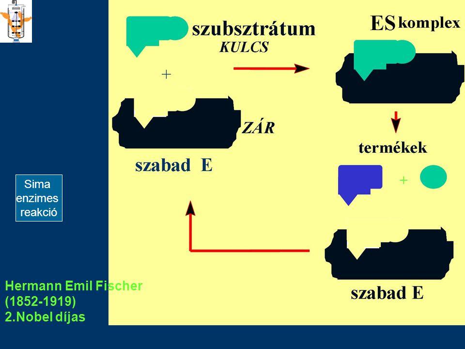 1894 BIM BSc Hermann Emil Fischer (1852-1919) 2.Nobel díjas Sima enzimes reakció