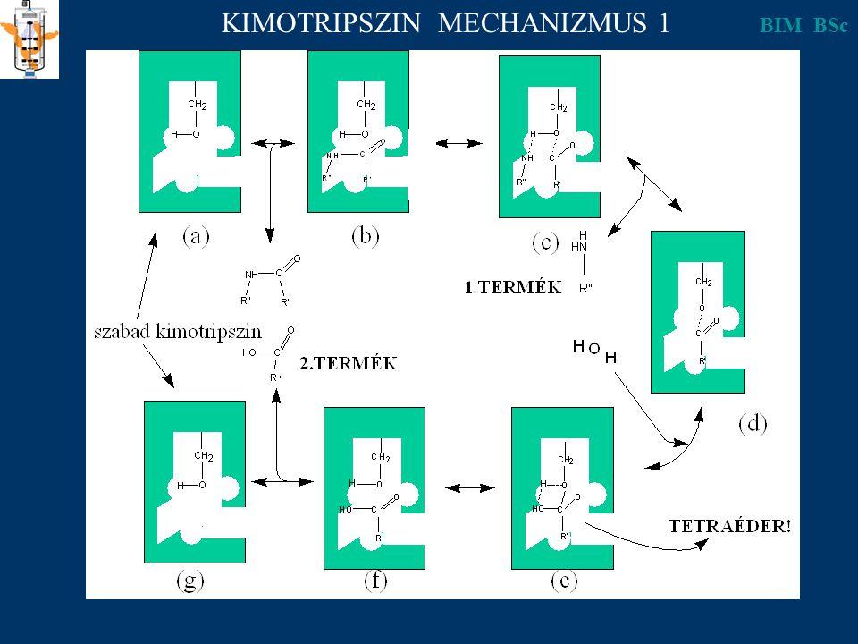 KIMOTRIPSZIN MECHANIZMUS 1 BIM BSc