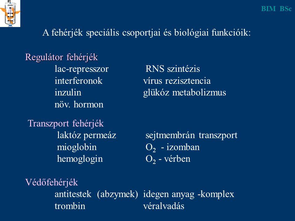 A fehérjék speciális csoportjai és biológiai funkcióik: Regulátor fehérjék lac-represszor RNS szintézis interferonokvírus rezisztencia inzulinglükóz metabolizmus növ.