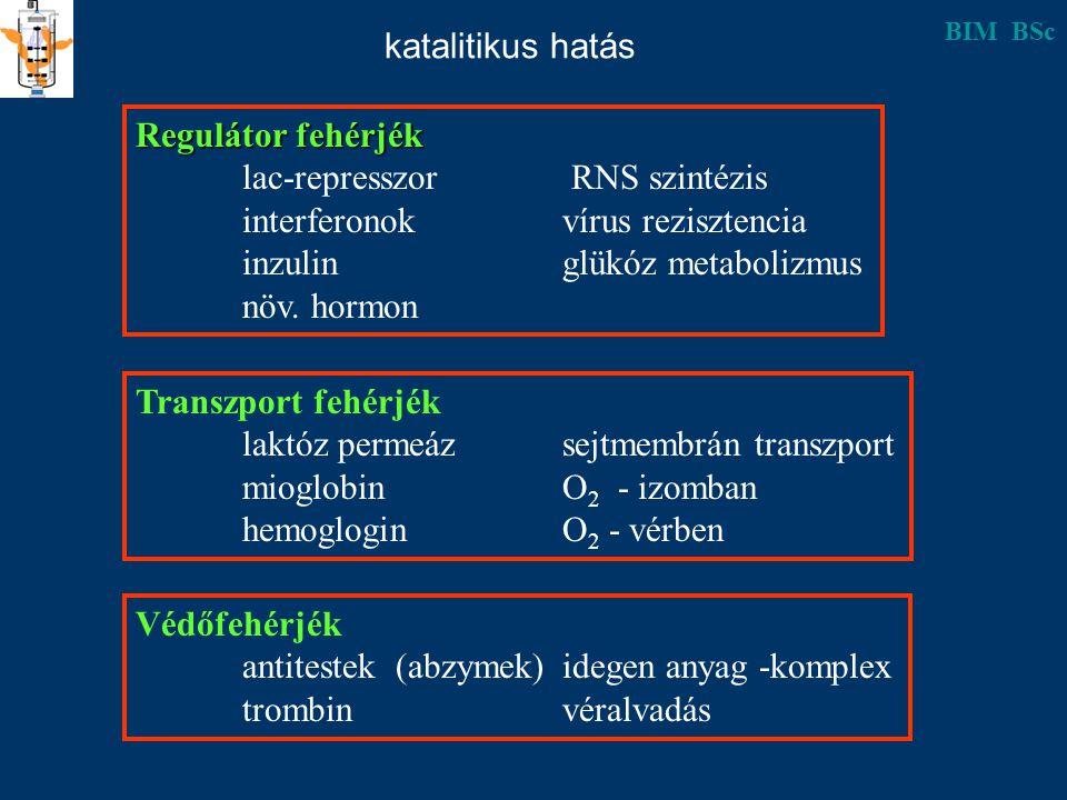 Regulátor fehérjék lac-represszor RNS szintézis interferonokvírus rezisztencia inzulinglükóz metabolizmus növ.