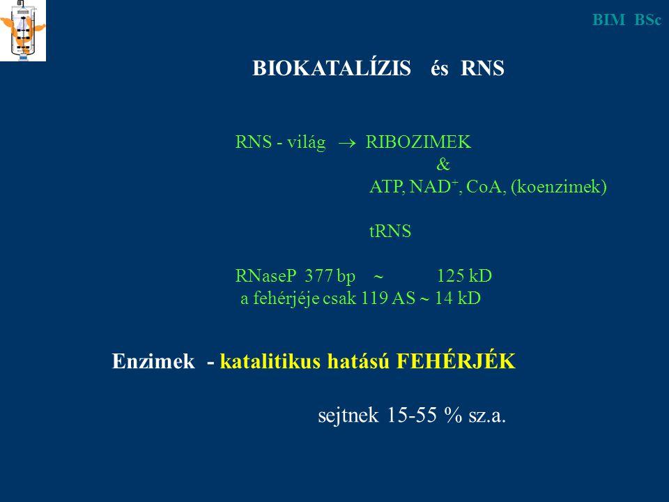 BIOKATALÍZIS és RNS RNS - világ  RIBOZIMEK & ATP, NAD +, CoA, (koenzimek) tRNS RNaseP 377 bp  125 kD a fehérjéje csak 119 AS  14 kD Enzimek - katalitikus hatású FEHÉRJÉK sejtnek 15-55 % sz.a.