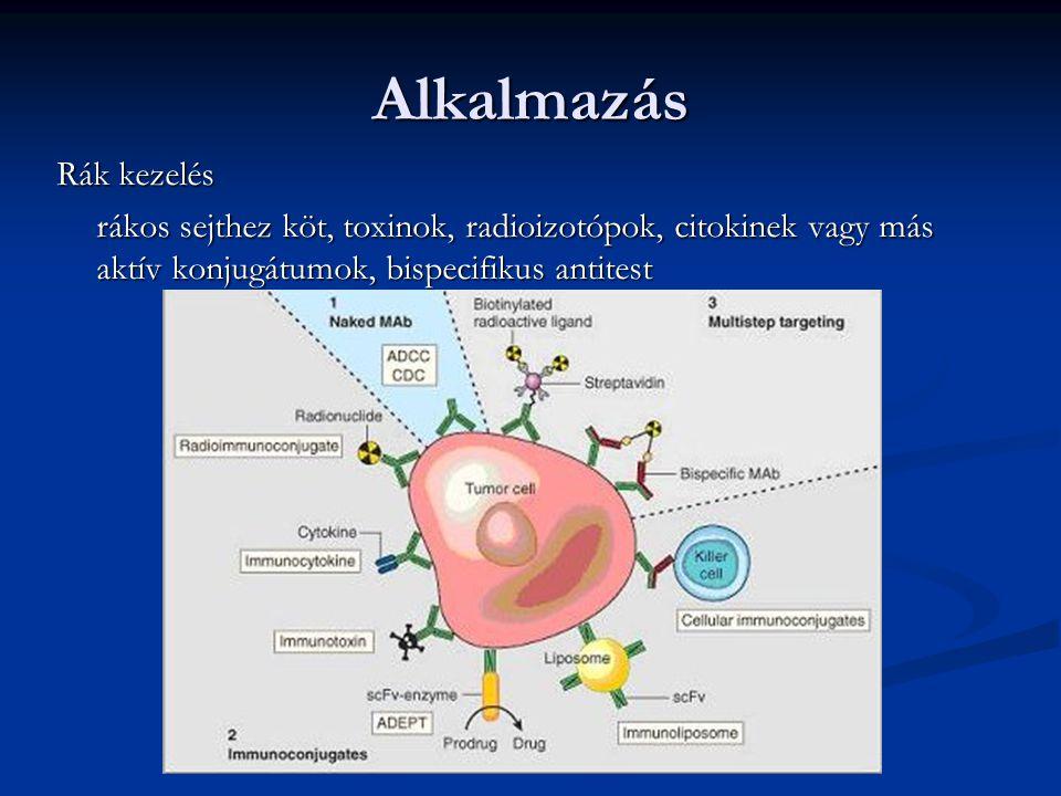 Alkalmazás Rák kezelés rákos sejthez köt, toxinok, radioizotópok, citokinek vagy más aktív konjugátumok, bispecifikus antitest