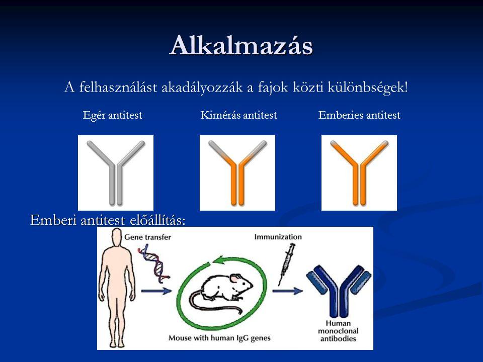 Alkalmazás Emberi antitest előállítás: Egér antitestKimérás antitestEmberies antitest A felhasználást akadályozzák a fajok közti különbségek!