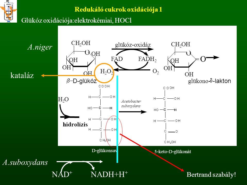 Redukáló cukrok oxidációja 1 Glükóz oxidációja:elektrokémiai, HOCl OH O CH 2 OH O CH 2 OH FAD FADH 2 glükóz-oxidáz H 2 O 2 O 2 Acetobacter suboxydans