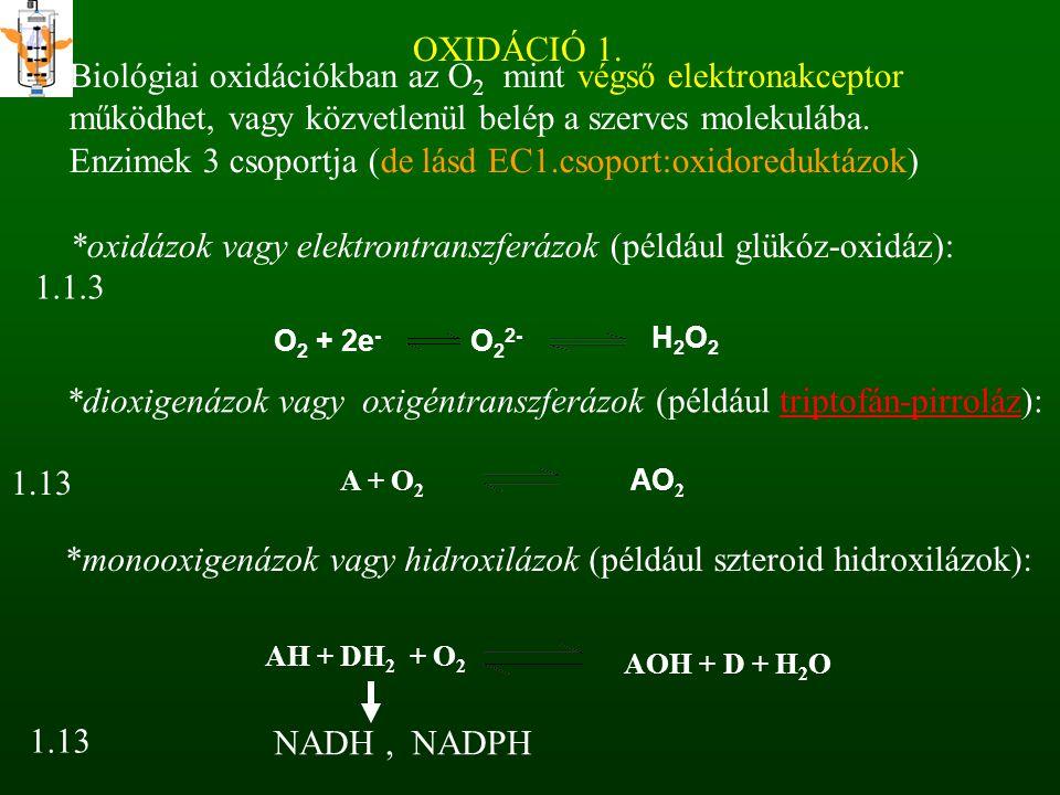 OXIDÁCIÓ 1. O22- Biológiai oxidációkban az O 2 mint végső elektronakceptor működhet, vagy közvetlenül belép a szerves molekulába. Enzimek 3 csoportja