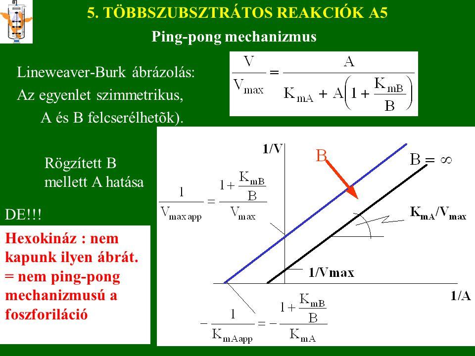 5. TÖBBSZUBSZTRÁTOS REAKCIÓK A5 Lineweaver-Burk ábrázolás: Az egyenlet szimmetrikus, A és B felcserélhetõk). Ping-pong mechanizmus Rögzített B mellett