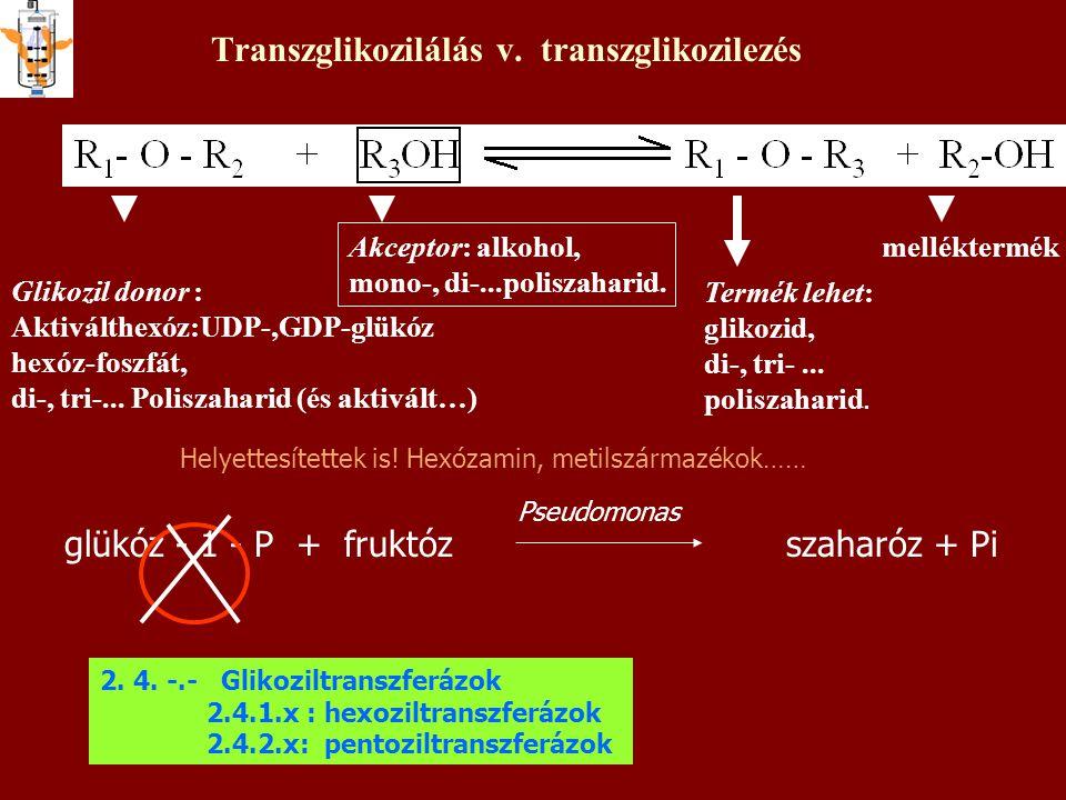 Transzglikozilálás v. transzglikozilezés Termék lehet: glikozid, di-, tri-... poliszaharid. Glikozil donor : Aktiválthexóz:UDP-,GDP-glükóz hexóz-foszf