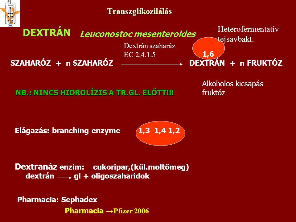 Transzglikozilálás DEXTRÁN Leuconostoc mesenteroides SZAHARÓZ + n SZAHARÓZ DEXTRÁN + n FRUKTÓZ Dextrán szaharáz EC 2.4.1.5 NB.: NINCS HIDROLÍZIS A TR.