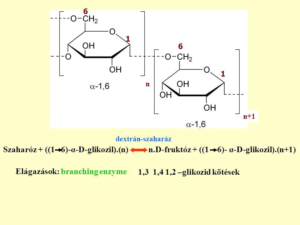 Szaharóz + ((1 6)-α-D-glikozil).(n) n.D-fruktóz + ((1 6)- α-D-glikozil).(n+1) Elágazások: branching enzyme 1,3 1,4 1,2 –glikozid kötések L.mesenteroides dextrán-szaharáz 1 6 6 1 n+1 n