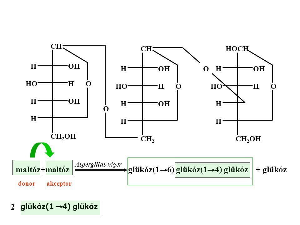 OH CH H OH HO H H H O CH 2 OH OH HOCH H HO H H H O CH 2 OH OH CH H OH HO H H H O CH 2 O O Aspergillusniger maltóz+maltózglükóz(1 6) glükóz(1 4) glükóz