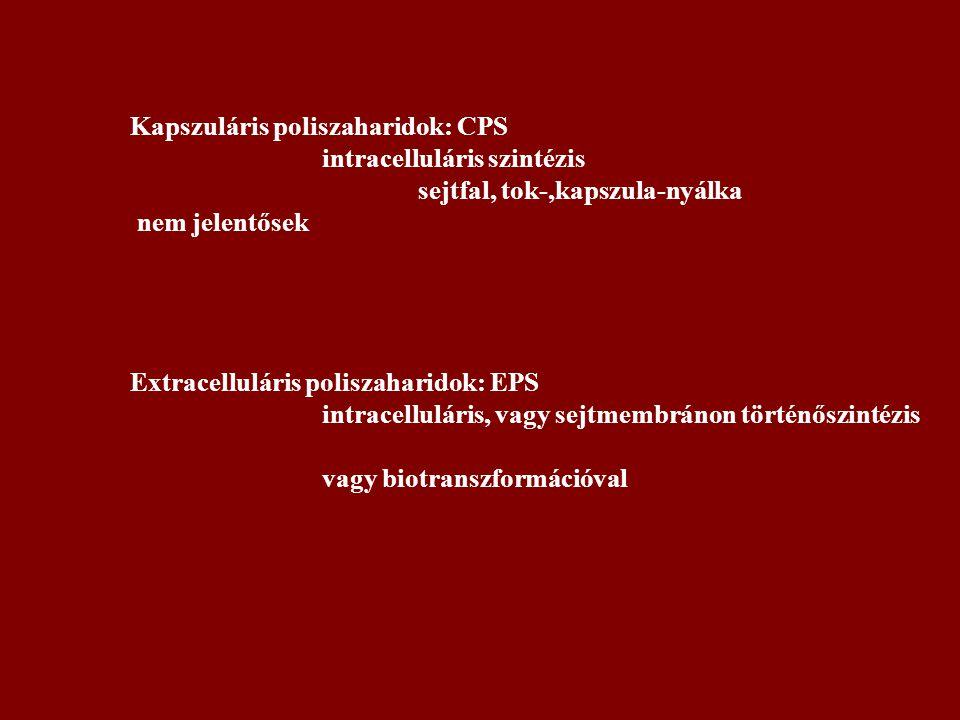 Kapszuláris poliszaharidok: CPS intracelluláris szintézis sejtfal, tok-,kapszula-nyálka nem jelentősek Extracelluláris poliszaharidok: EPS intracelluláris, vagy sejtmembránon történőszintézis vagy biotranszformációval