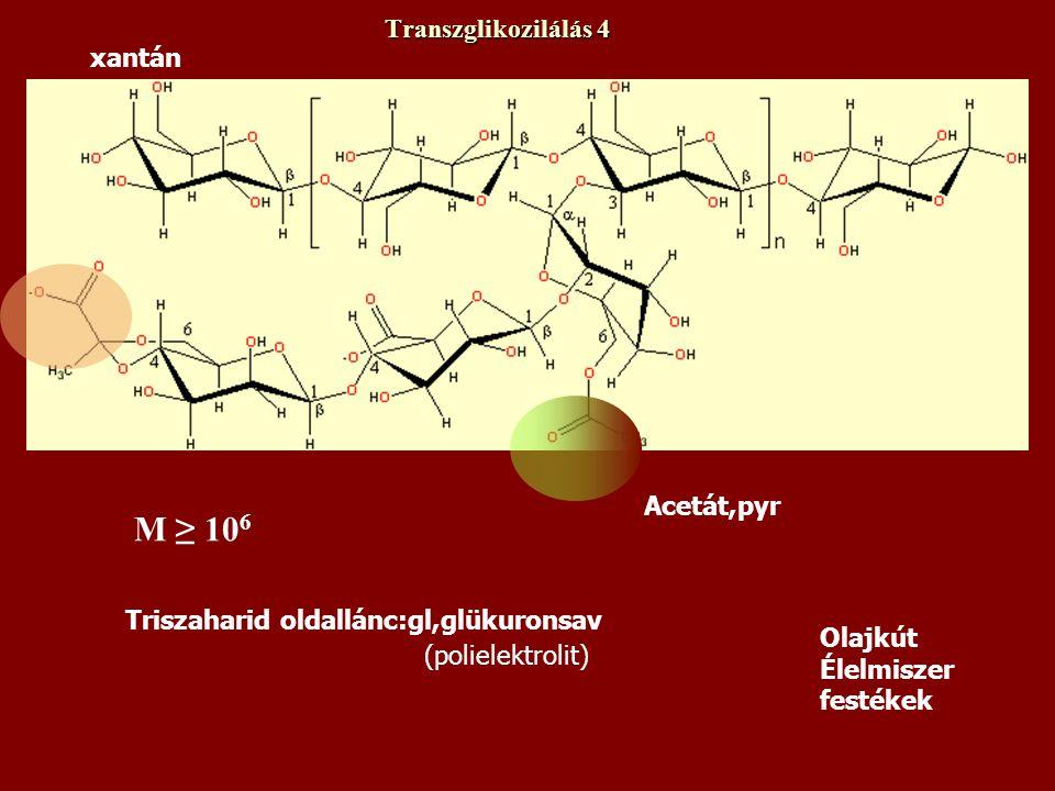 xantán Transzglikozilálás 4 Triszaharid oldallánc:gl,glükuronsav Acetát,pyr (polielektrolit) Olajkút Élelmiszer festékek M ≥ 10 6