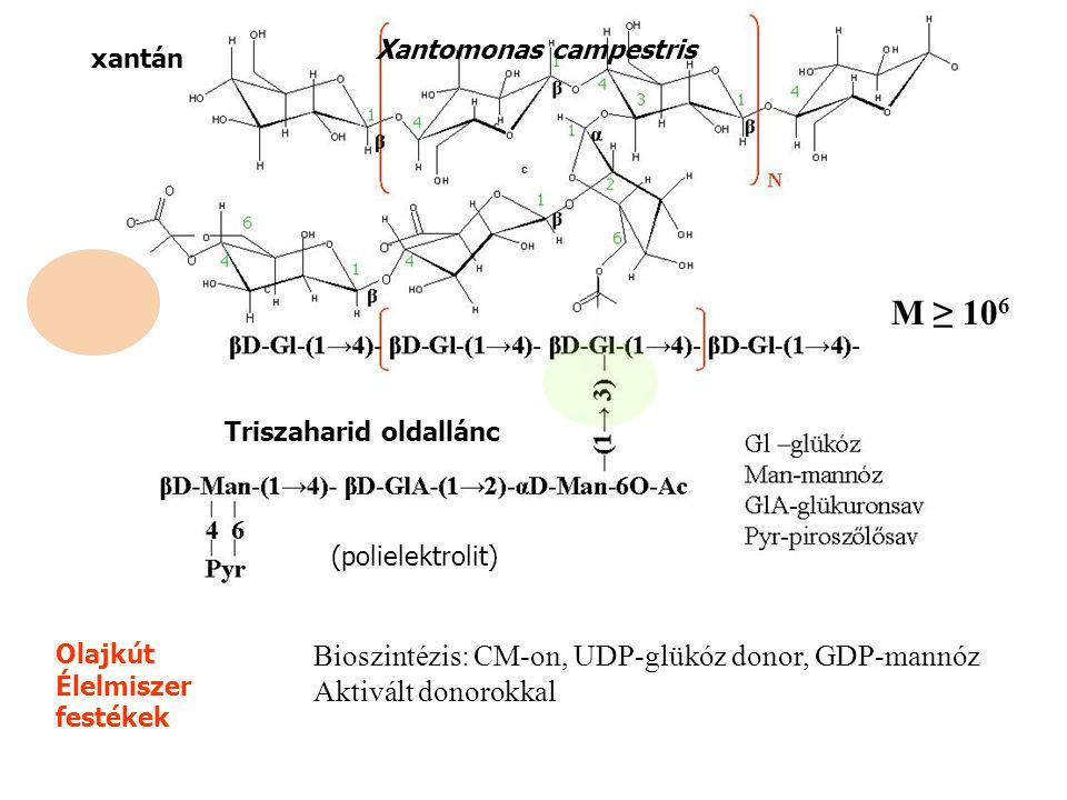 xantán Triszaharid oldallánc (polielektrolit) Olajkút Élelmiszer festékek M ≥ 10 6 Xantomonas campestris Bioszintézis: CM-on, UDP-glükóz donor, GDP-mannóz Aktivált donorokkal