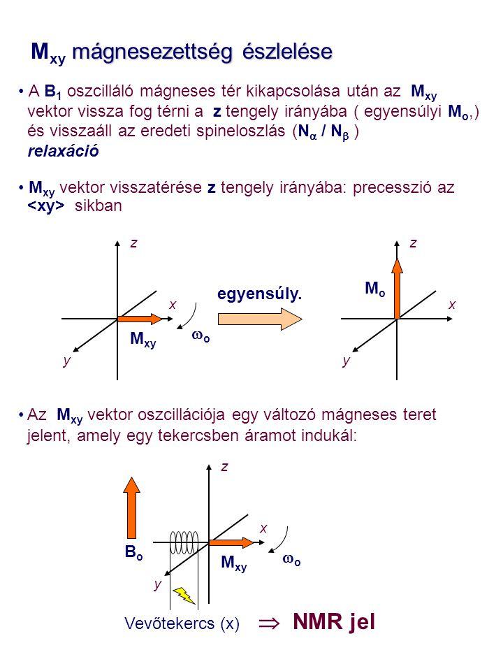 mágnesezettség észlelése M xy mágnesezettség észlelése A B 1 oszcilláló mágneses tér kikapcsolása után az M xy vektor vissza fog térni a z tengely irányába ( egyensúlyi M o,) és visszaáll az eredeti spineloszlás (N  / N  ) relaxáció M xy vektor visszatérése z tengely irányába: precesszió az sikban Az M xy vektor oszcillációja egy változó mágneses teret jelent, amely egy tekercsben áramot indukál: z x M xy y z x y Vevőtekercs (x) MoMo  NMR jel egyensúly.