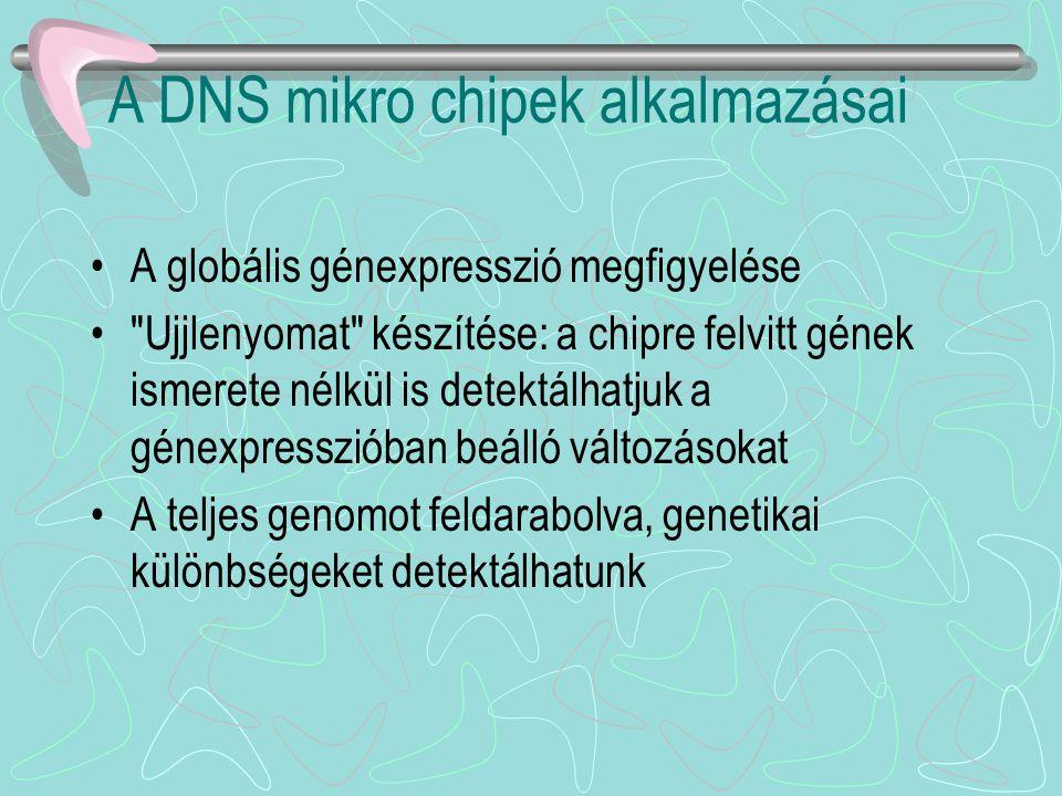 A DNS mikro chipek alkalmazásai A globális génexpresszió megfigyelése
