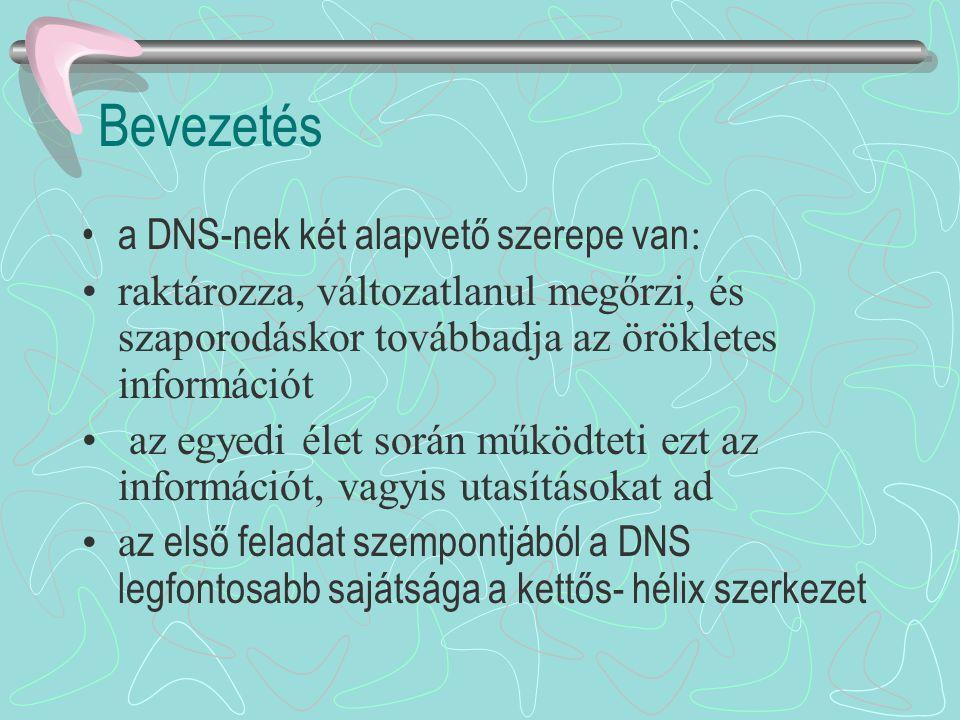 A DNS kettős-hélix szerkezete a két DNS-lánc egymást kiegészítő és meghatározó szerkezetű, az egyik lánc A, C, G és T nukleotidjaival átellenben a másik láncban csak T,G,C és A foglalhat helyet e z a mechanizmus felel az örökletes információtartalom változatlan továbbadásáért a következő nemzedéknek azonban a DNS lánc megkettőződése során bizonyos valószínűséggel hibák történhetnek: ezeket a hibákat, ha megmaradnak mutációknak nevezzük.