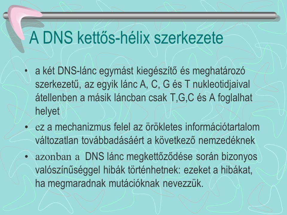 A DNS kettős-hélix szerkezete a két DNS-lánc egymást kiegészítő és meghatározó szerkezetű, az egyik lánc A, C, G és T nukleotidjaival átellenben a más