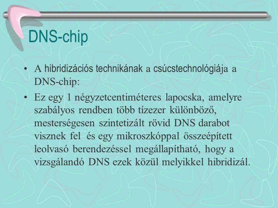 DNS-chip A hibridizációs technikának a csúcstechnológiá ja a DNS-chip: Ez egy 1 négyzetcentiméteres lapocska, amelyre szabályos rendben több tízezer k