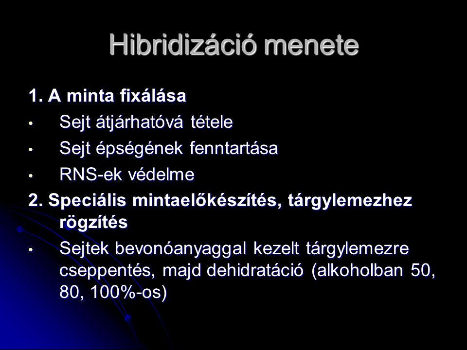 Hibridizáció menete 3.