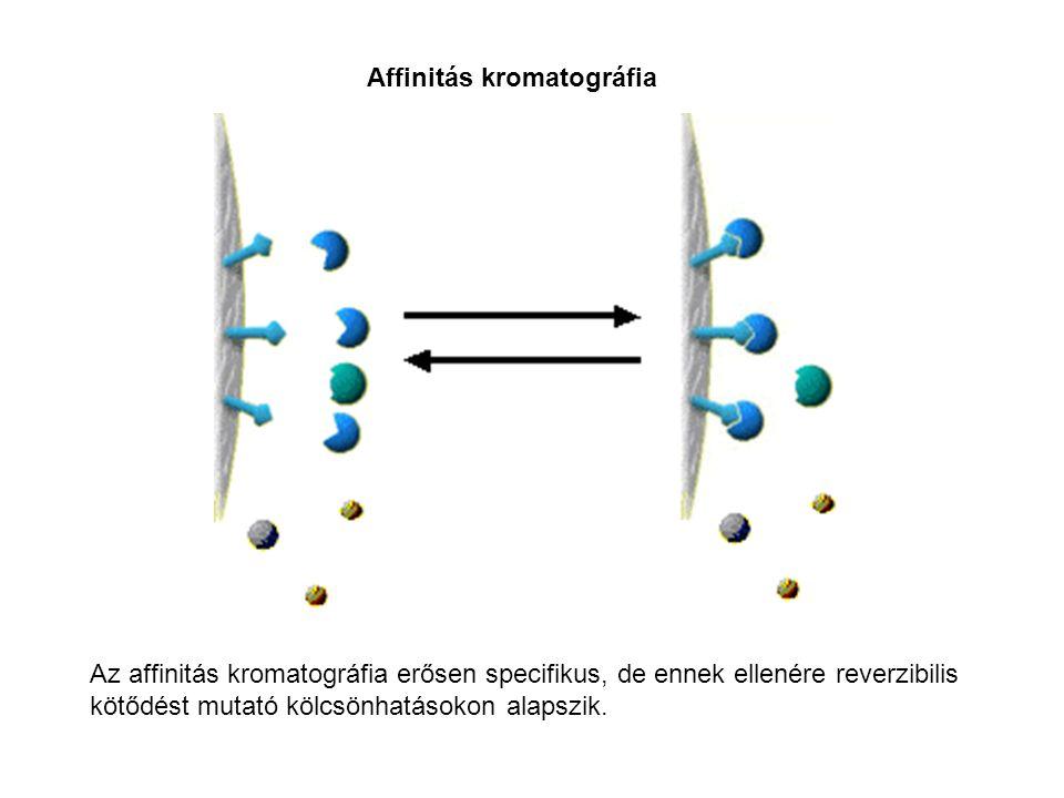 Az affinitás kromatográfia erősen specifikus, de ennek ellenére reverzibilis kötődést mutató kölcsönhatásokon alapszik. Affinitás kromatográfia
