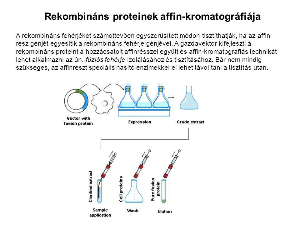 Rekombináns proteinek affin-kromatográfiája A rekombináns fehérjéket számottevően egyszerűsített módon tisztíthatják, ha az affin- rész génjét egyesít