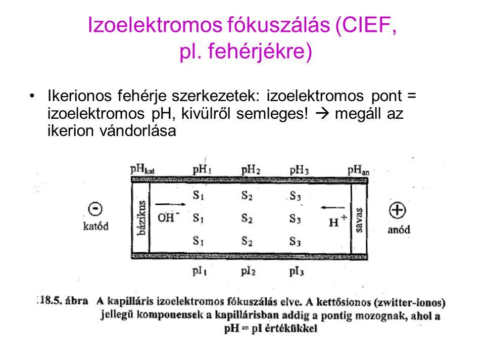 Izoelektromos fókuszálás (CIEF, pl. fehérjékre) Ikerionos fehérje szerkezetek: izoelektromos pont = izoelektromos pH, kivülről semleges!  megáll az i
