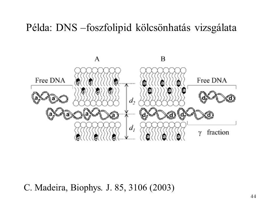 44 Példa: DNS –foszfolipid kölcsönhatás vizsgálata C. Madeira, Biophys. J. 85, 3106 (2003)