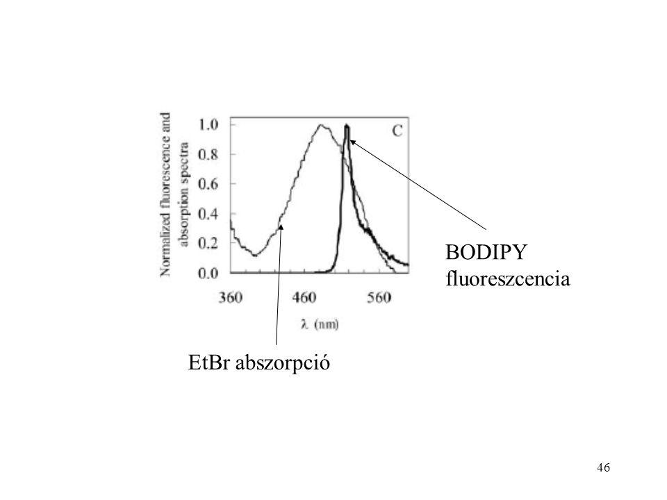 46 EtBr abszorpció BODIPY fluoreszcencia