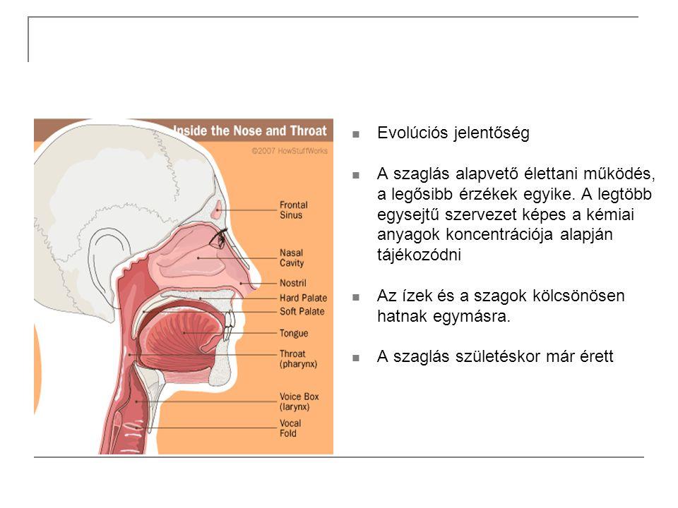 Evolúciós jelentőség A szaglás alapvető élettani működés, a legősibb érzékek egyike. A legtöbb egysejtű szervezet képes a kémiai anyagok koncentrációj