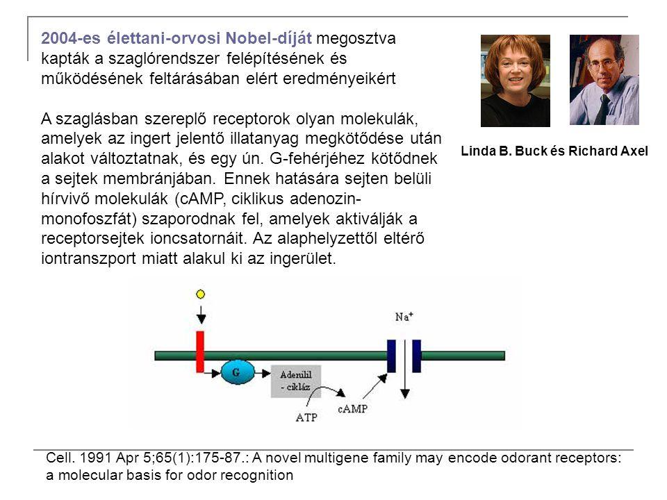 Linda B. Buck és Richard Axel Cell. 1991 Apr 5;65(1):175-87.: A novel multigene family may encode odorant receptors: a molecular basis for odor recogn