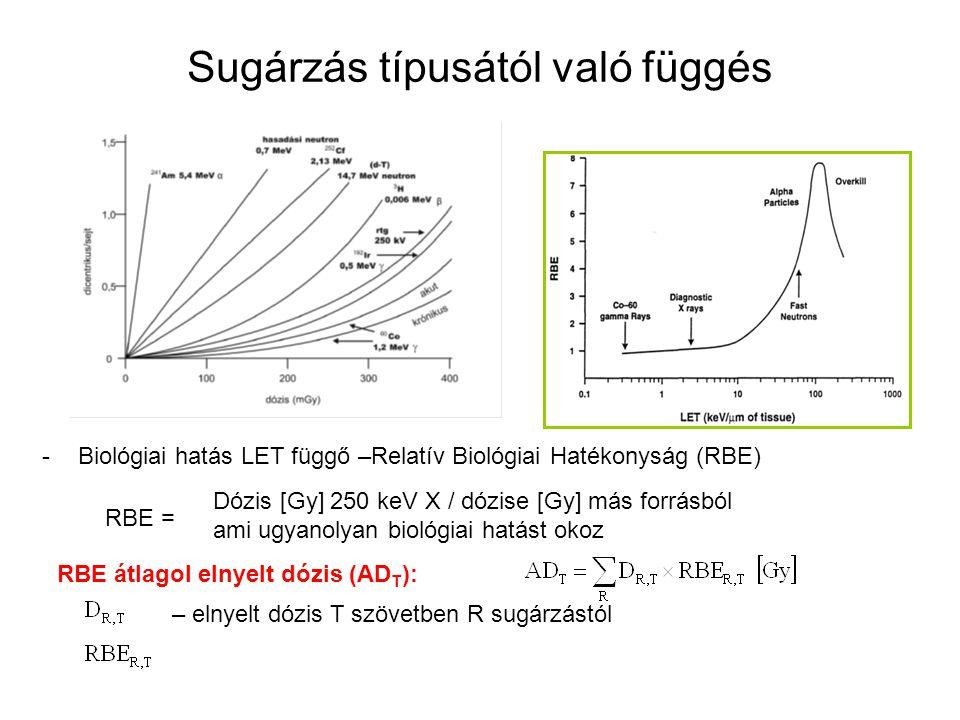 Sugárzás típusától való függés -Biológiai hatás LET függő –Relatív Biológiai Hatékonyság (RBE) RBE átlagol elnyelt dózis (AD T ): – elnyelt dózis T szövetben R sugárzástól Dózis [Gy] 250 keV X / dózise [Gy] más forrásból ami ugyanolyan biológiai hatást okoz RBE =
