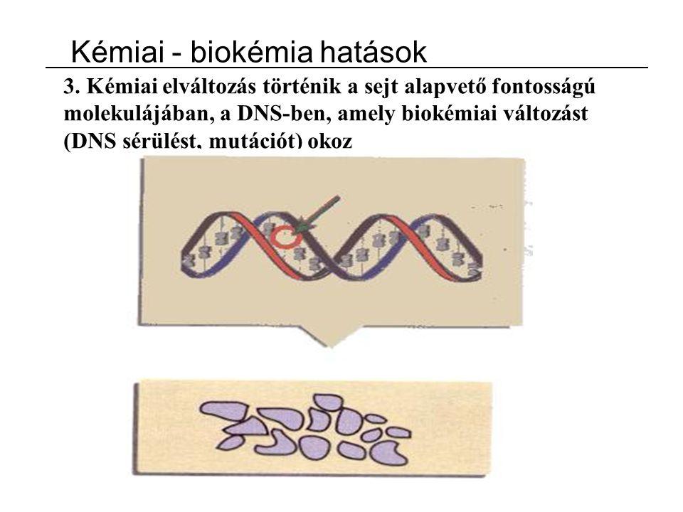 3. Kémiai elváltozás történik a sejt alapvető fontosságú molekulájában, a DNS-ben, amely biokémiai változást (DNS sérülést, mutációt) okoz Kémiai - bi