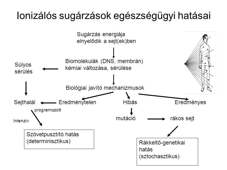 Ionizálós sugárzások egészségügyi hatásai Szövetpusztító hatás (determinisztikus) Rákkeltő-genetikai hatás (sztochasztikus) Sugárzás energiája elnyelődik a sejt(ek)ben Biomolekulák (DNS, membrán) kémiai változása, sérülése Biológiai javító mechanizmusok Súlyos sérülés Sejthalál EredménytelenEredményes programozott Hibás Intenzív mutáció rákos sejt