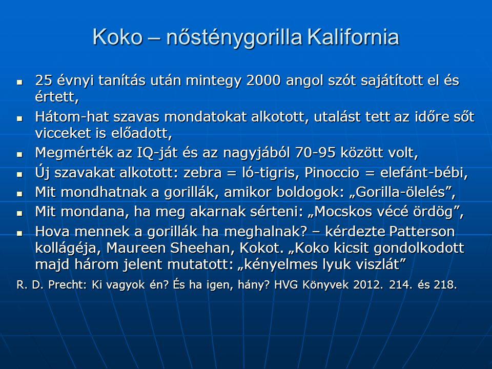 Koko – nősténygorilla Kalifornia 25 évnyi tanítás után mintegy 2000 angol szót sajátított el és értett, 25 évnyi tanítás után mintegy 2000 angol szót