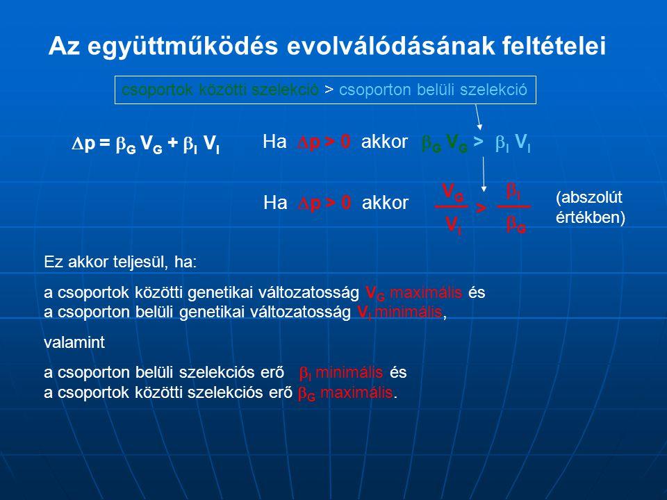 Az együttműködés evolválódásának feltételei  p =  G V G +  I V I Ha  p > 0 akkor  G V G >  I V I VG VIVG VI IGIG > csoportok közötti szelekc