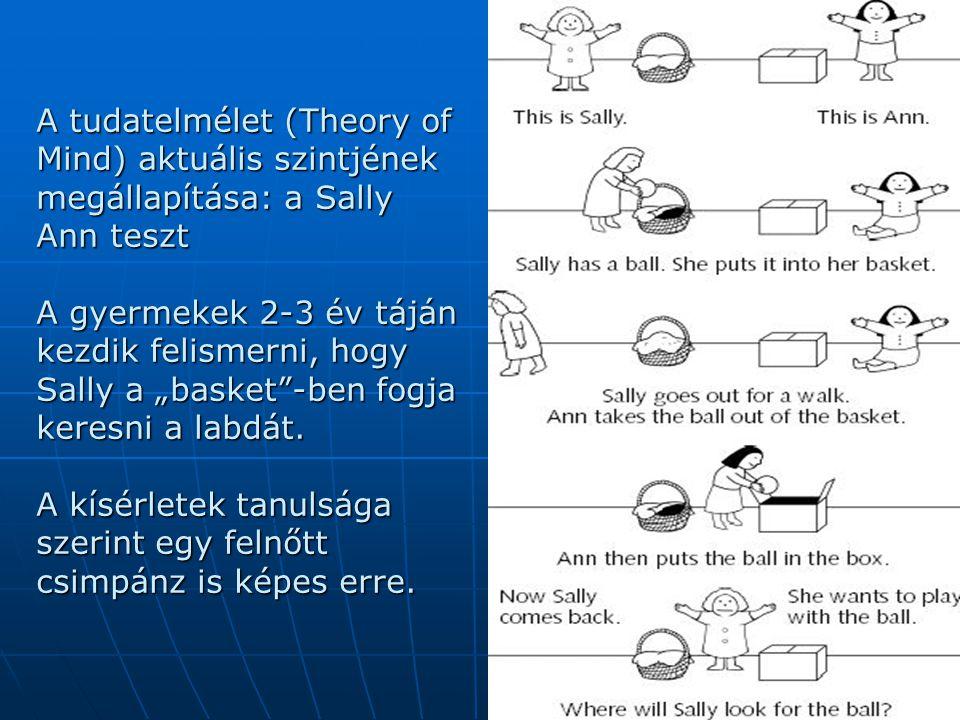 """A tudatelmélet (Theory of Mind) aktuális szintjének megállapítása: a Sally Ann teszt A gyermekek 2-3 év táján kezdik felismerni, hogy Sally a """"basket"""""""