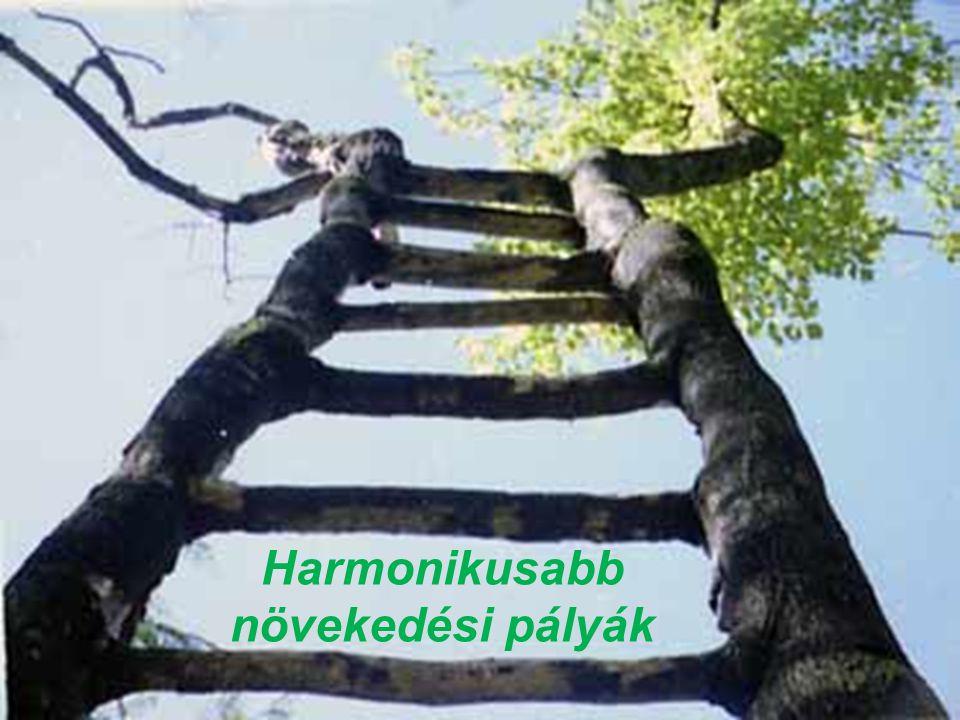 Harmonikusabb növekedési pályák