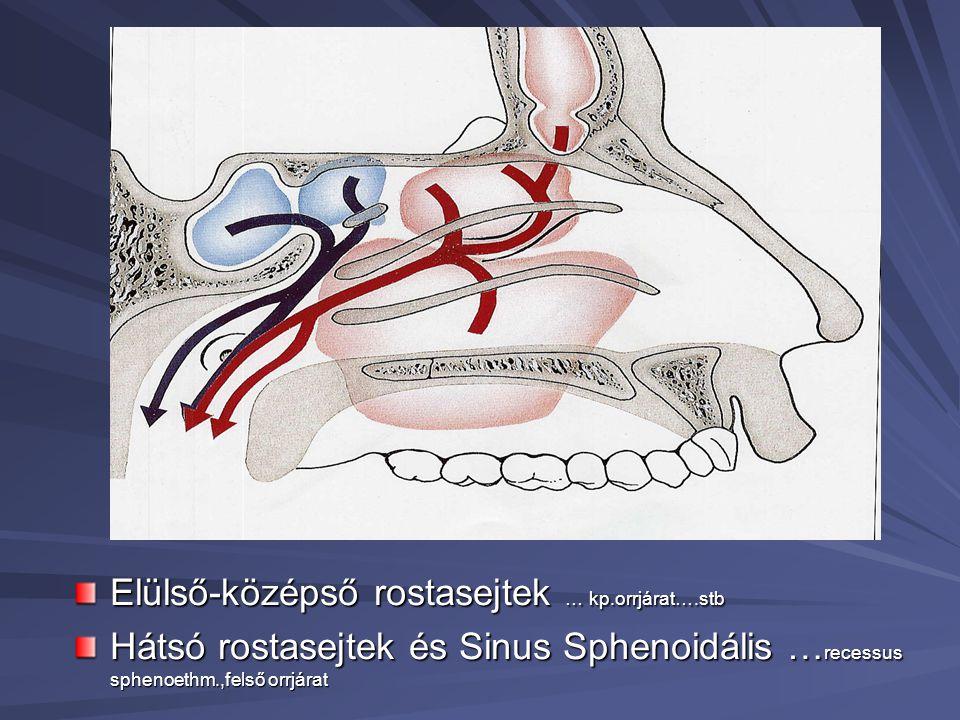 Elülső-középső rostasejtek … kp.orrjárat….stb Hátsó rostasejtek és Sinus Sphenoidális … recessus sphenoethm.,felső orrjárat