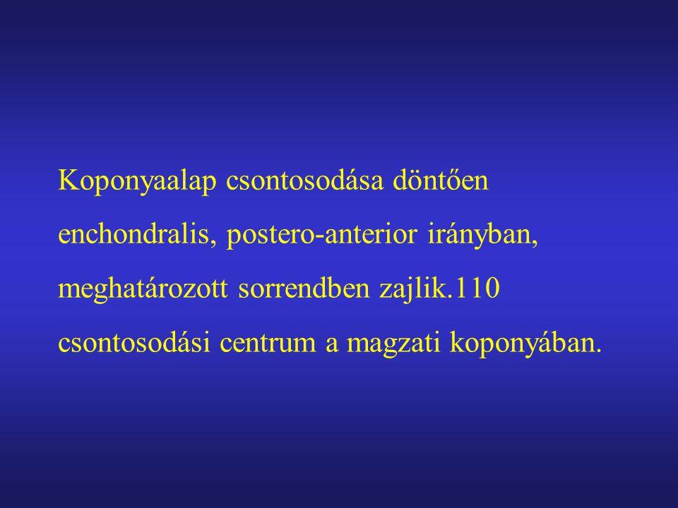 Koponyaalap csontosodása döntően enchondralis, postero-anterior irányban, meghatározott sorrendben zajlik.110 csontosodási centrum a magzati koponyába
