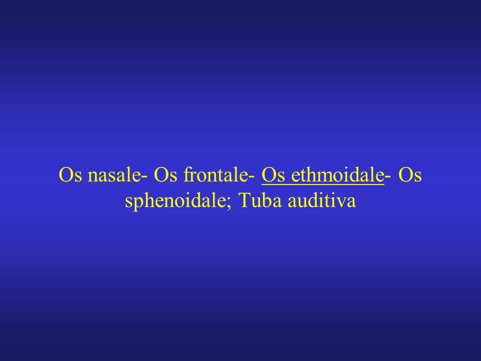Os nasale- Os frontale- Os ethmoidale- Os sphenoidale; Tuba auditiva