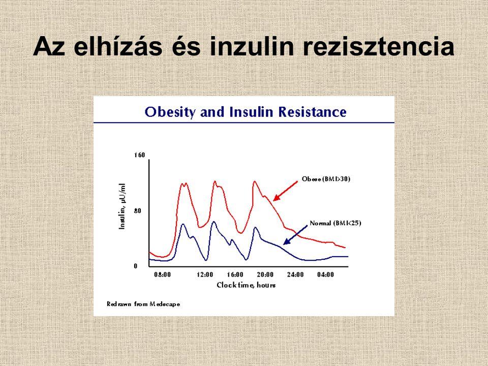 Az elhízás és inzulin rezisztencia