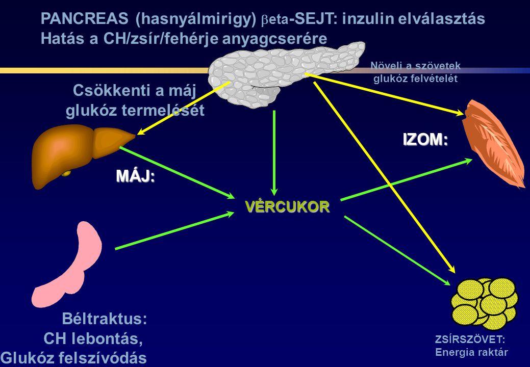 VÉRCUKOR Béltraktus: CH lebontás, Glukóz felszívódás MÁJ: IZOM: ZSÍRSZÖVET: Energia raktár PANCREAS (hasnyálmirigy)  eta -SEJT: inzulin elválasztás H