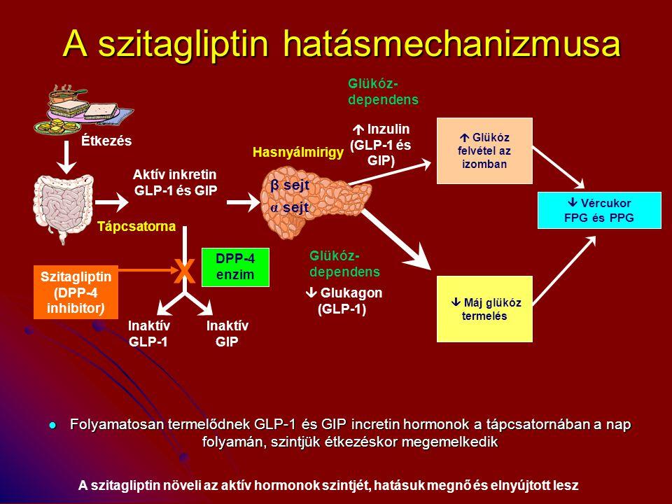 A szitagliptin hatásmechanizmusa Folyamatosan termelődnek GLP-1 és GIP incretin hormonok a tápcsatornában a nap folyamán, szintjük étkezéskor megemelk