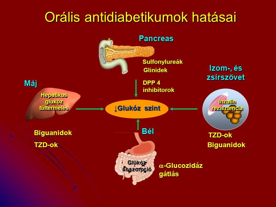 Orális antidiabetikumok hatásai Pancreas ↓Glukóz szint Bél  -Glucozidáz gátlás Izom-, és zsírszövet Máj TZD-ok Biguanidok Sulfonylureák Glinidek Glük