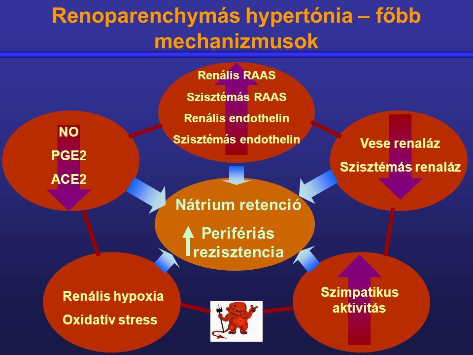 Renális hypoxia Oxidatív stress Renális RAAS Szisztémás RAAS Renális endothelin Szisztémás endothelin Vese renaláz Szisztémás renaláz NO PGE2 ACE2 Szi