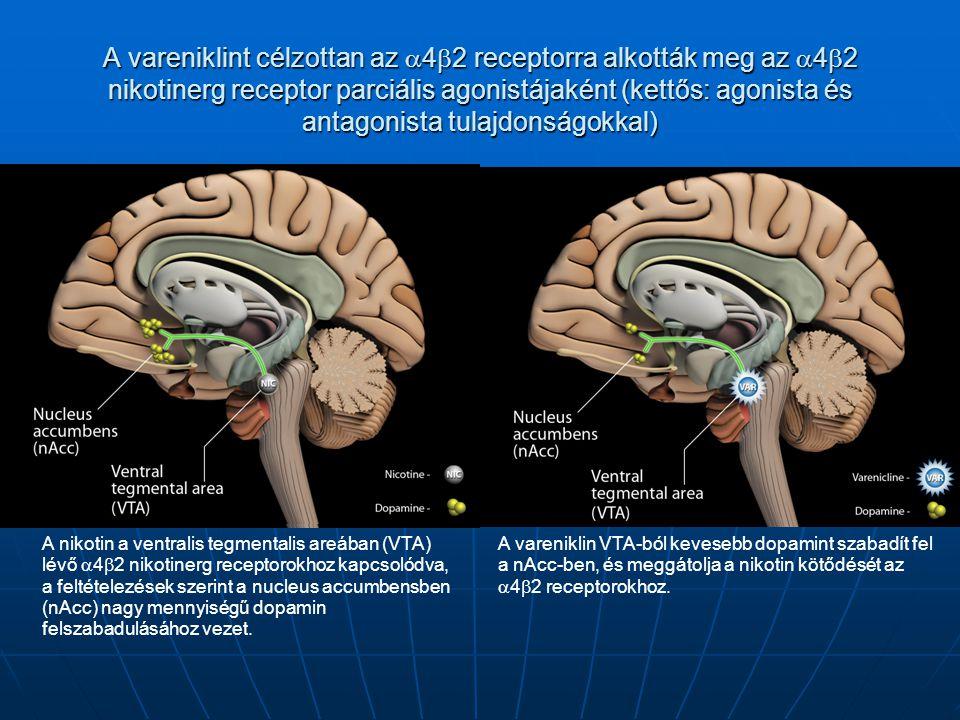 A vareniklint célzottan az  4  2 receptorra alkották meg az  4  2 nikotinerg receptor parciális agonistájaként (kettős: agonista és antagonista tu