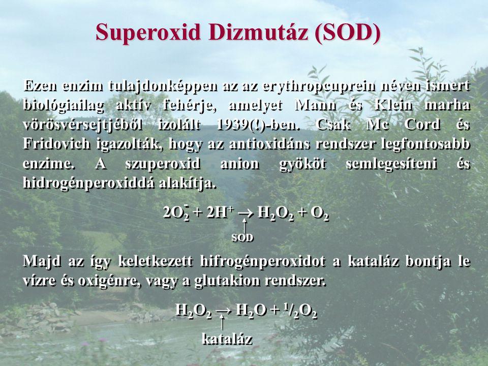 Superoxid Dizmutáz (SOD) Ezen enzim tulajdonképpen az az erythropcuprein néven ismert biológiailag aktív fehérje, amelyet Mann és Klein marha vörösvérsejtjéből izolált 1939(!)-ben.